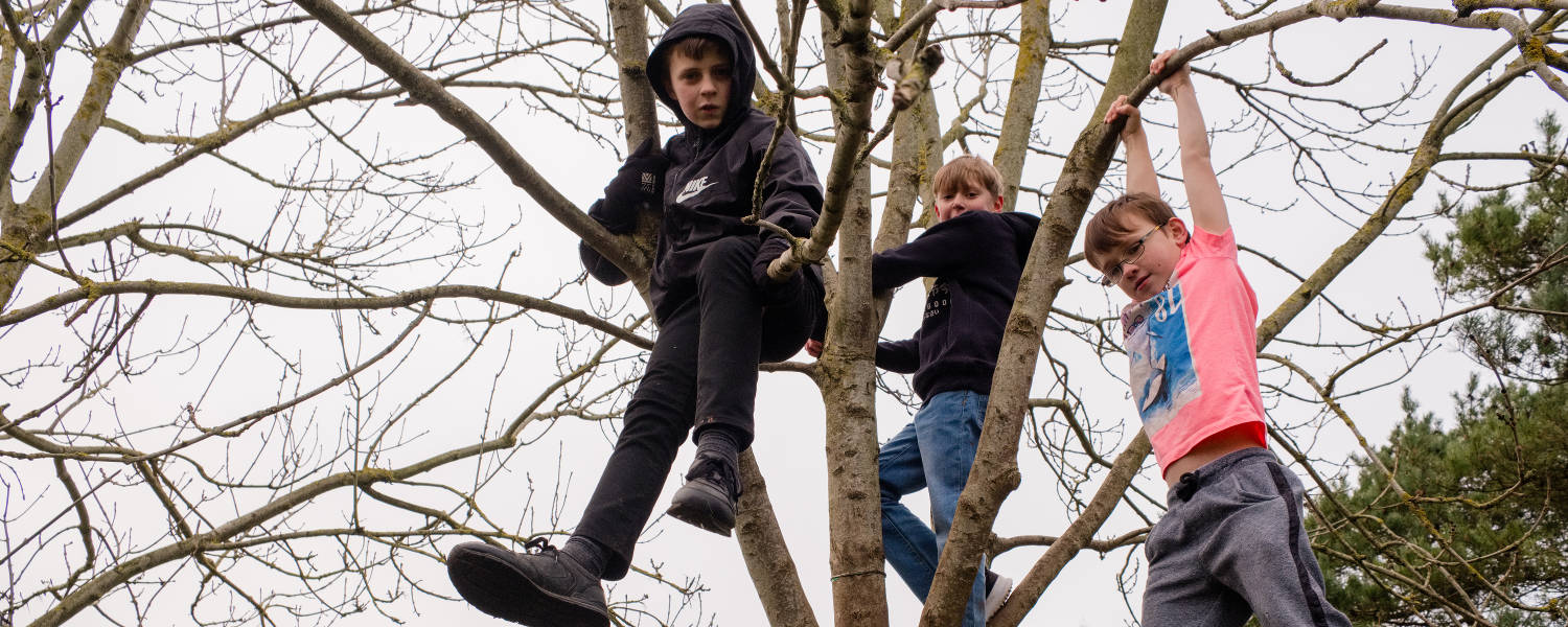Boys hanging from a tree